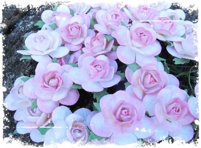 Bilde av 2,5 Roser farget kant rosa
