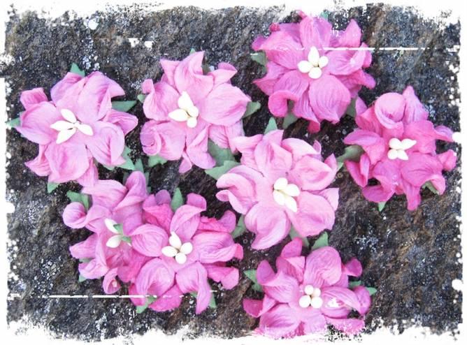 Bilde av Små gardenia, rosa (6)